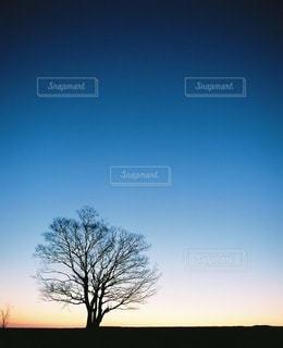 自然の写真・画像素材[3327]