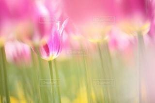 花の写真・画像素材[3374]