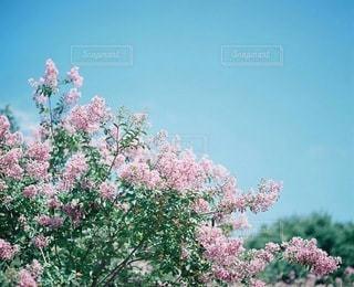 自然の写真・画像素材[3366]