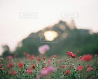 自然の写真・画像素材[3352]