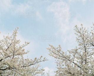 自然の写真・画像素材[3351]