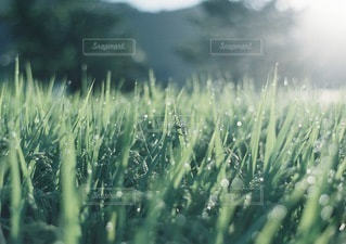 自然の写真・画像素材[3349]