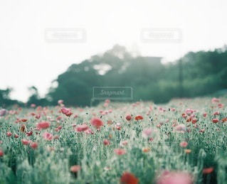 自然の写真・画像素材[3348]