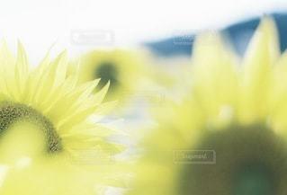 自然の写真・画像素材[3347]