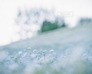 自然の写真・画像素材[3344]