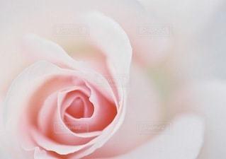 花の写真・画像素材[3343]