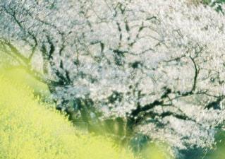 自然の写真・画像素材[3339]