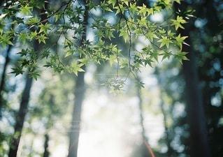 自然の写真・画像素材[3335]