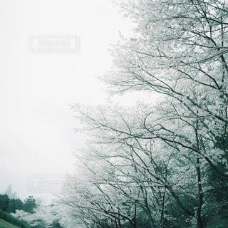 自然の写真・画像素材[3331]