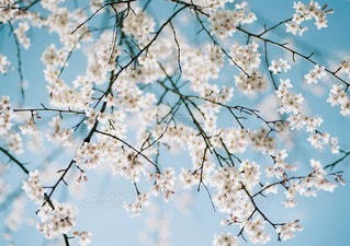 春の写真・画像素材[10852]