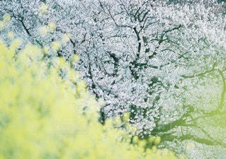 春の写真・画像素材[10850]