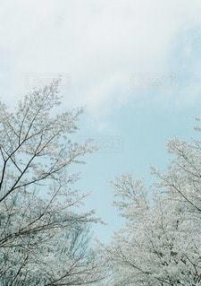春の写真・画像素材[10851]