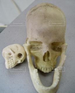 顎の写真・画像素材[291252]