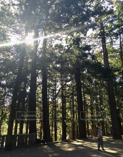 森林 - No.291311