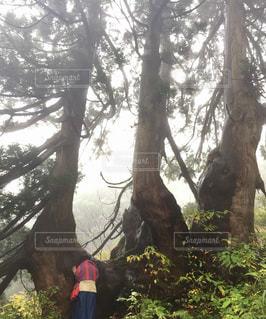 フォレスト内のツリーの写真・画像素材[965874]