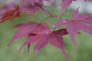 自然の写真・画像素材[290675]