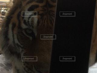動物の写真・画像素材[293861]