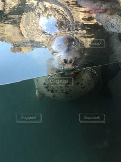 野生動物の写真・画像素材[290774]