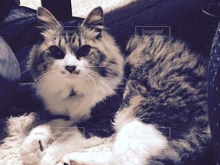 猫の写真・画像素材[299097]