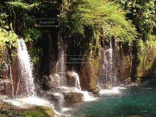 自然の写真・画像素材[291573]