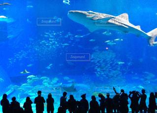 水族館の写真・画像素材[296137]