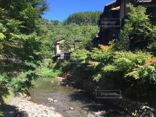 黒川温泉の写真・画像素材[1019908]