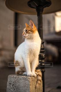 猫の写真・画像素材[301117]