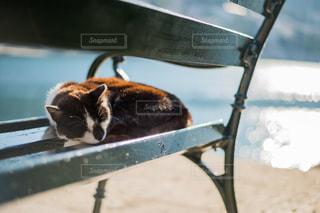 猫の写真・画像素材[301120]