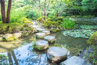 庭の写真・画像素材[301436]