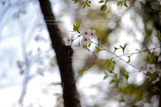 花の写真・画像素材[353235]