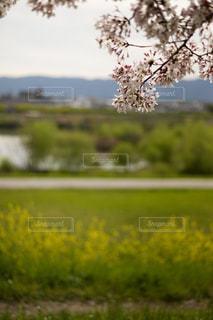 花の写真・画像素材[353236]