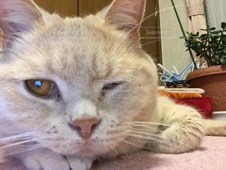 猫の写真・画像素材[291605]