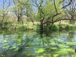 木々に囲まれた清水の写真・画像素材[2362048]