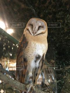 動物の写真・画像素材[291965]