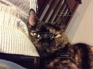 猫の写真・画像素材[291720]