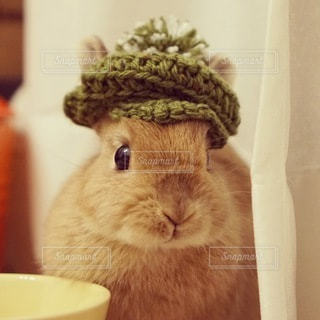 帽子をかぶった猫の写真・画像素材[1336]