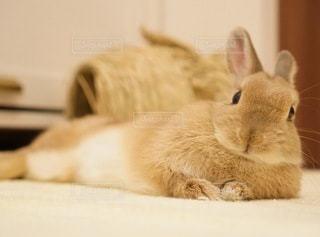 ベッドの上で横になっている猫の写真・画像素材[1305]