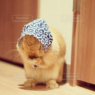 カウンターに座っている猫の写真・画像素材[1251]