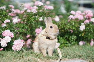 庭の小動物の写真・画像素材[1199]
