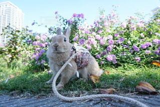 庭の小動物の写真・画像素材[1193]