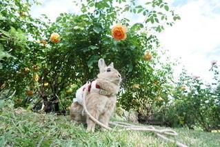 庭の猫 - No.1164
