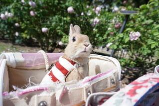 ピンクのケーキの上に座って猫 - No.1162