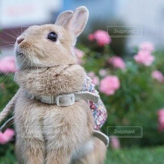 庭の小動物の写真・画像素材[1161]