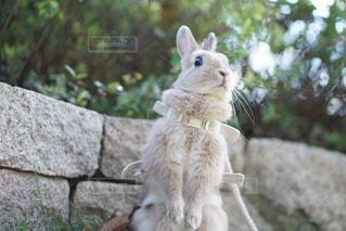 庭の小動物の写真・画像素材[1158]