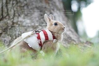 草の小さな茶色の動物の写真・画像素材[1147]