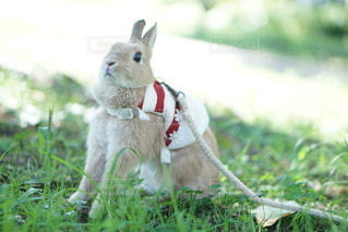 草の中に座っている犬の写真・画像素材[1134]