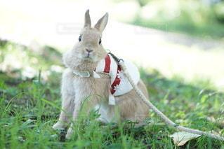 草の中に座っている犬の写真・画像素材[1105]