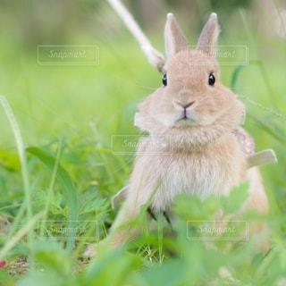 草の中の小動物の写真・画像素材[1099]