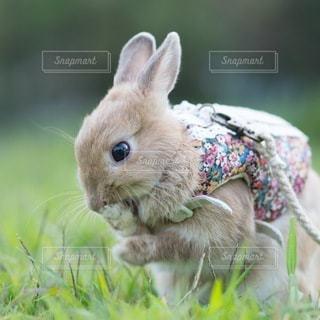 草の中の小動物の写真・画像素材[1097]