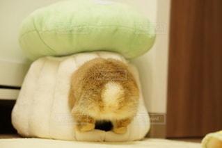ベッドの上に座っている猫の写真・画像素材[1081]